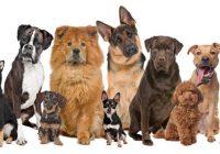 Suelos y mascotas